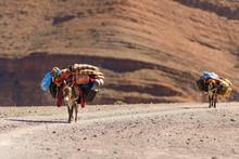 Donkeys With Luggage