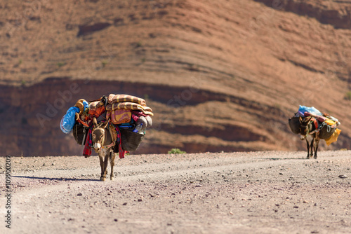 Deurstickers Ezel Donkeys with luggage