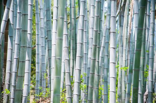 blue-bamboo-trunks-in-the-forest