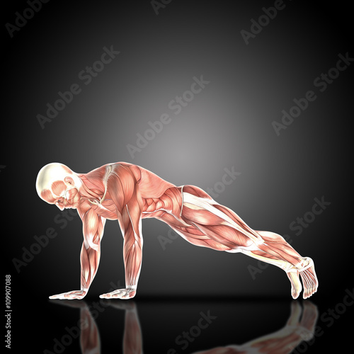Fotografie, Tablou  3D render of a medical figure with muscle map in press up pose