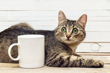 Young Cat Lying Next To A White Coffee Mug.
