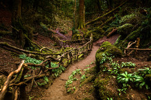 Path Through Puzzlewood, Fores...