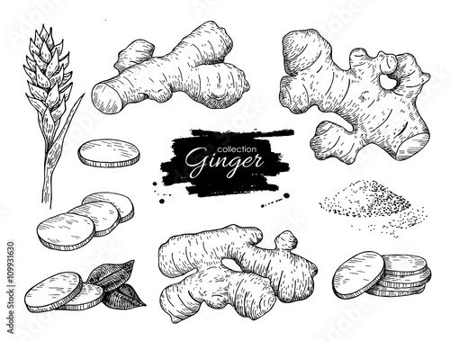 Fotografia Vector hand drawn Ginger set. Root, ginger pieces and flower.