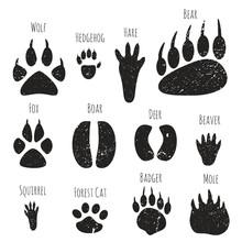 Set Of Forest Animals Footprin...