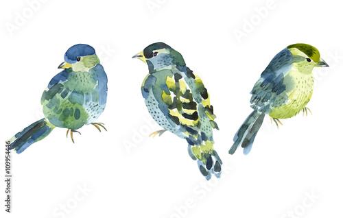 Fototapeta Watercolor bird collection for your design. obraz
