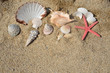 Red starfish and pile of seashells on sandy beach