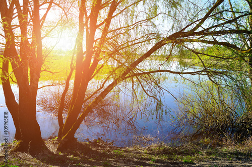 Poster Oranje eclat Sunny colorful spring landscape - willow under sunshine on the bank of the small river