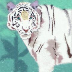 FototapetaWild Cats. White Tiger