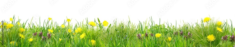 Fototapety, obrazy: Herrlich schlichte Wildblumenwiese vor Weiß