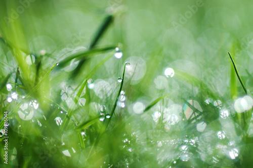 Staande foto Paardebloemen en water Fresh morning dew on spring grass, natural green background