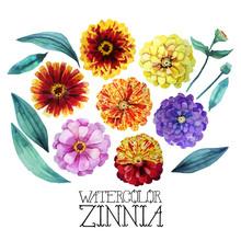 Watercolor Zinnia Set