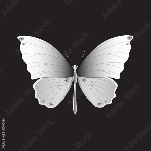 Iron Butterfly, Vector illustration. Wallpaper Mural