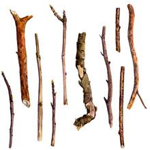 Watercolor Wood Twigs
