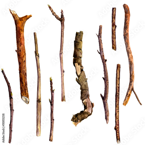 Fotografia watercolor wood twigs