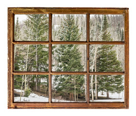 Fototapeta spruce and aspen in winter