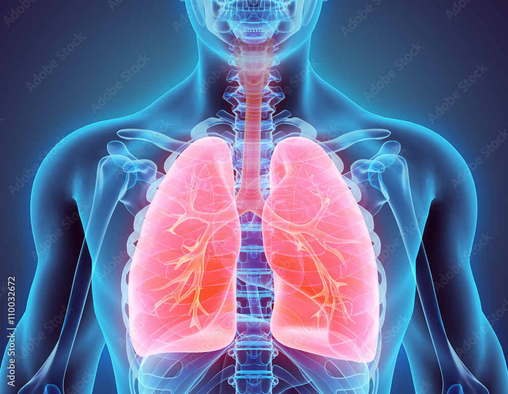 Fototapeta 3D illustration of Lungs, medical concept.