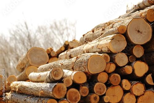 Obraz 木材 - fototapety do salonu