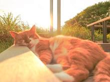 猫のお昼寝。