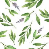 Watercolor vector seamless pattern hand drawn herb sage . - 110061601