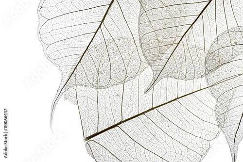 a leaf texture close up