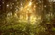 Mann genießt Sonne in nebligem Wald