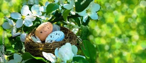 Fotografia, Obraz  vogelnest im frühling
