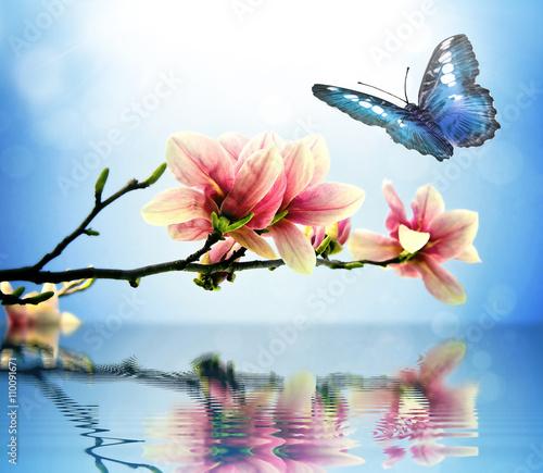 Plakat Motyl i magnolia