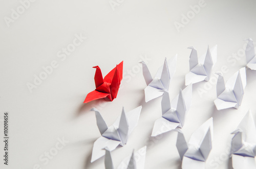 Photo  Close up red bird leading among white, Leadership concept.