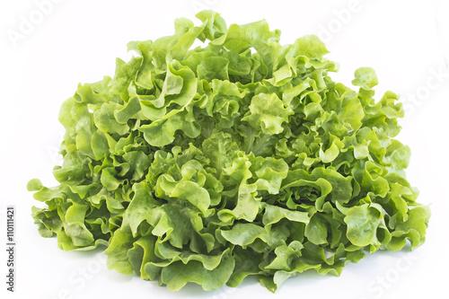Oak leaf lettuce isolated on white