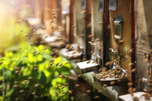 Photo Hives in an apiary with bees flying to the landing boards in a g