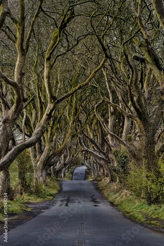 Keuken foto achterwand Noord Europa The Dark Hedges near Ballymoney, Co. Antrim, Northern Ireland, nature