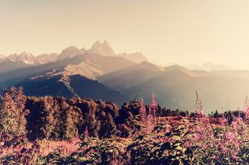 FototapetaRetro Landscape with Flowers