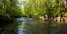 Fly Fisherman Fishing Trouts In  River