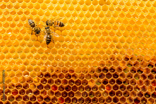 closeup of bees on honeycomb in apiary