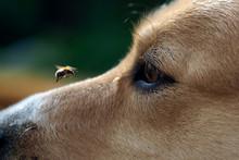 Big Eye Dog And Flying Bee. Th...