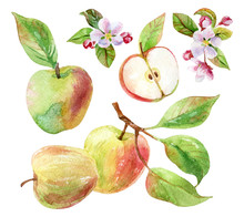 Apple Branch With Leaves And Fruits In Watercolor