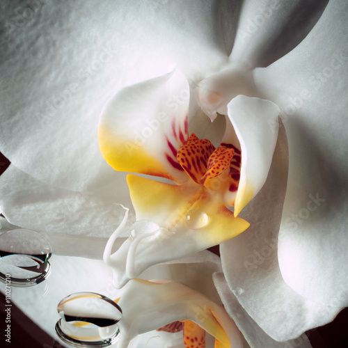 Fotografía  Orchidea con rugiada