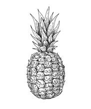 Vector Hand Drawn Pineapple. S...