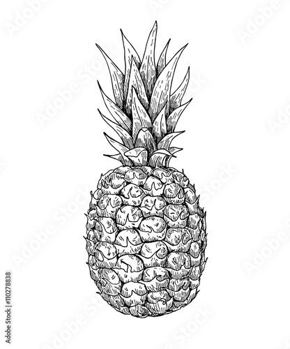 Vector hand drawn pineapple. Summer fruit engraved style illustr Wall mural