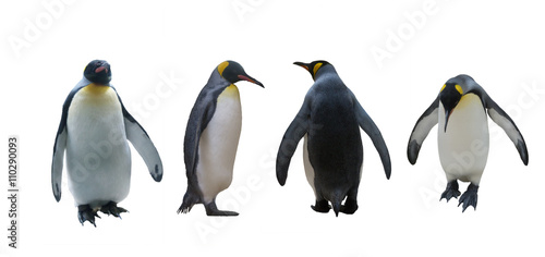 Tuinposter Pinguin Set imperial penguins on a white background