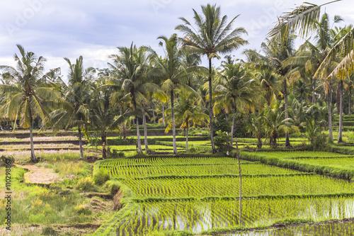 Tuinposter Wijngaard Rice fields on Bali, Indonesia