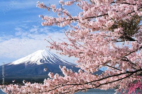 Fotografie, Obraz  富士山と桜