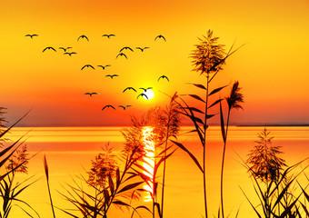 Panel Szklany Rzeki i Jeziora puesta de sol sobre el mar dorado