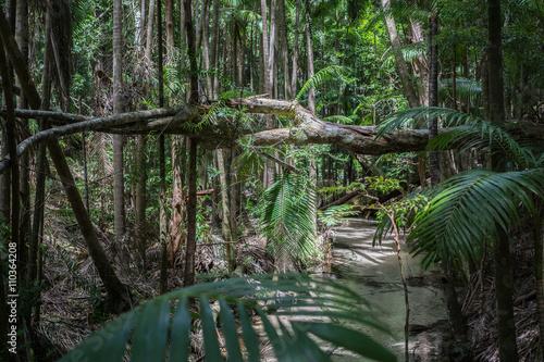 rainforest-fraser-island-australia