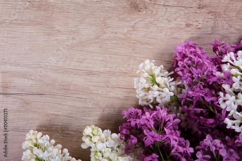 Obraz Kwiat bzu - fototapety do salonu