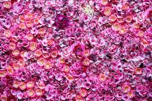 Beautiful Flowers Wall Backgro...