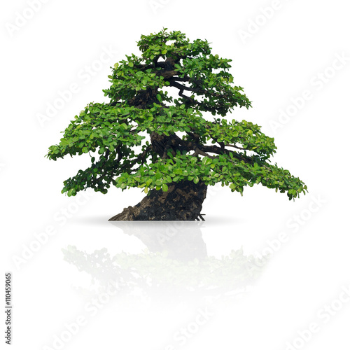 Photo Stands Bonsai Tree isolated