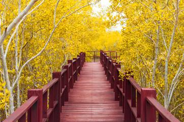 Fototapetawooden bridge & autumn forest.