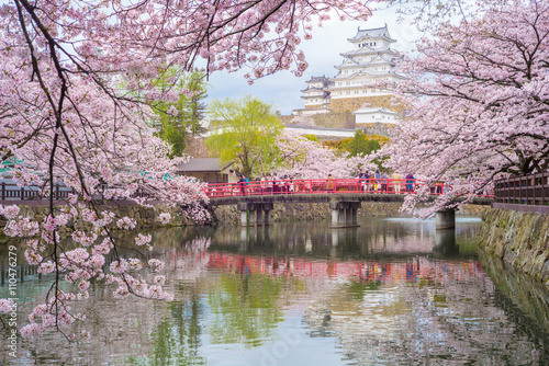 Poster Kyoto Himeji Castle with beautiful cherry blossom in spring season