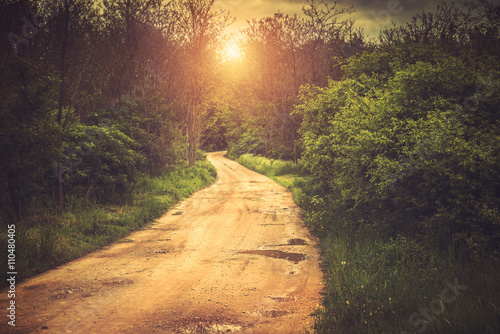 Cadres-photo bureau Route dans la forêt Path in the forest